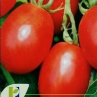 Missouri - 50 gr - Seminte de tomate Missouri Oval Alungite pentru Industrializare si Conservare