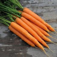 Morcovi Amsterdam (1 kg), seminte de morcovi crocanti, gust placut, Agrosem
