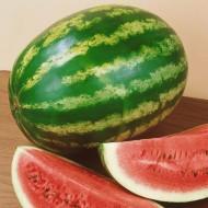 Obla F1 - 500 sem - Seminte de pepene verde foarte apreciat pe piata productiv si uniform cu fructe de 11-12 kg forma ovala pulpa dulce rezistent la decolorarea exterioara a fructului de la Esasem