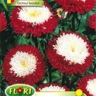 Ochiul Boului Rosu cu Alb - Seminte Flori Ochiul Boului de la Florian