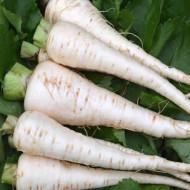 Pastarnac GUERNSEY - 20 g - Seminte de pastarnac soi rezistent, Agrosem