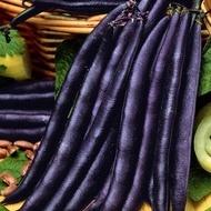 Purple Queen (50 gr) Seminte de Fasole pitica mov Purple Queen Soi Productiv Timpuriu de la Florian