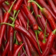 Seminte ardei iute Fireflame F1 (500 seminte), vegetativ, De Ruiter Seeds