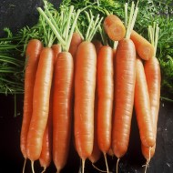 Seminte morcovi Cosianna F1 (25.000 sem), cal.1,6-1,8mm, agroTIP