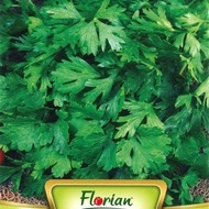Seminte Patrunjel COMON 2 - 10 grame