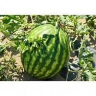 Seminte pepene verde Super Crimson Sweet OP (50 gr), tip Crimson, agroTIP