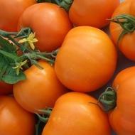 Seminte rosii portocalii Bendida F1 (1000 seminte), semitimpurii culoare portocaliu intens, Geosem