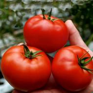 Seminte rosii Saint Pierre (0.5 gr), soi traditional francez de tomate, Florin
