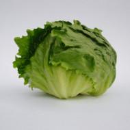Seminte salata iceberg Lectrice (5000 seminte), Bejo Zaden