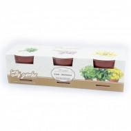 Set de cultivare - Ceai antistress, Colectia City Garden