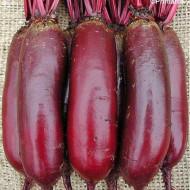 Sfecla rosie Cylindra (280 seminte), sfecla soi timpuriu, forma cilindrica-alungita, gust placut, Agrosem