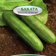 Slice King F1 - 35 sem - Seminte Castraveti de Salata Hibrid Productiv de la Sakata Japonia
