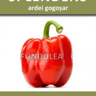 SPLENDENS (750 seminte) de Ardei Gogosar Timpuriu, SCDL Buzau