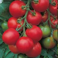 Tolstoi F1 – 5 grame - Seminte de rosii hibrid nedeterminat Bejo