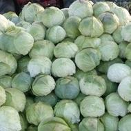 Varza de toamna Balcan - Balkan (10 gr) seminte varza soi cu capatana indesata, frunze subtiri, corespunde cu varza de Buzau, Florian