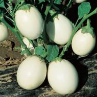 Vinete White Egg (200 seminte), vinete albe in forma de ou, Agrosem