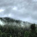 Mountain Rain Fragrance Oil