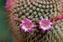 Baja Cactus Blossom Fragrance Oil
