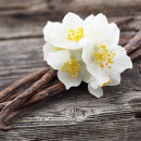 Vanilla Oak BB Type Fragrance Oil