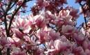 Blackberry Magnolia Fragrance Oil