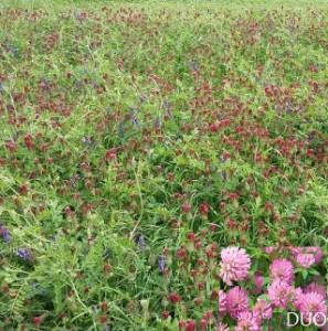 Mix iarba furaj verde si gunoi de grajd verde cu trifoi incarnat, trifoi rosu si mazariche DUO