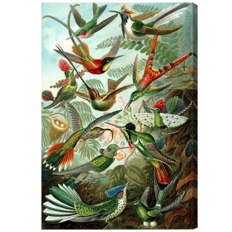 Tablou Remedy 'Haeckel Bird Study' Graphic Art Print 115cm inaltime x 77cm latime