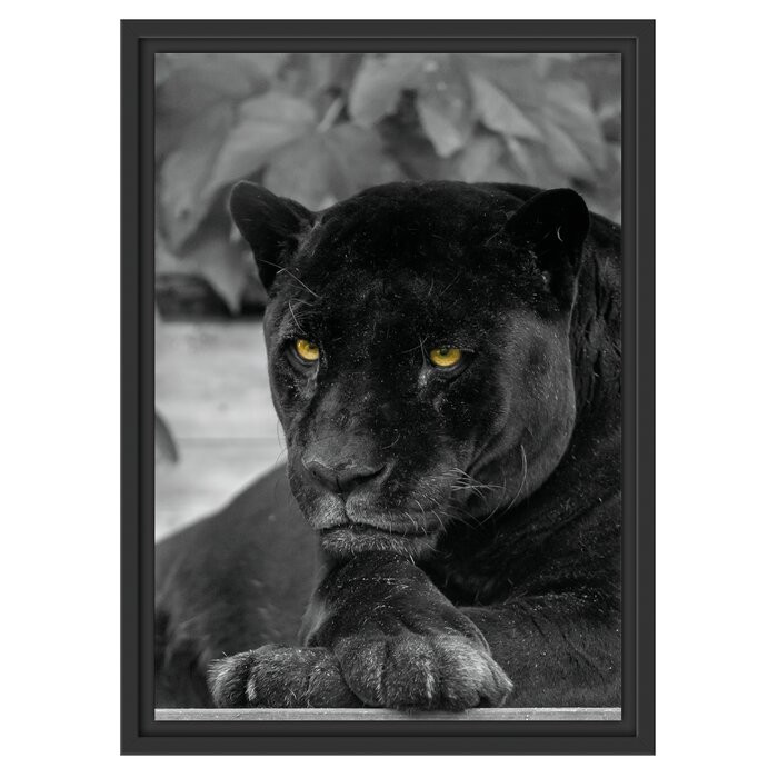 "Tablou ""Pantera neagra"", 55 x 40 cm poza chilipirul-zilei.ro"