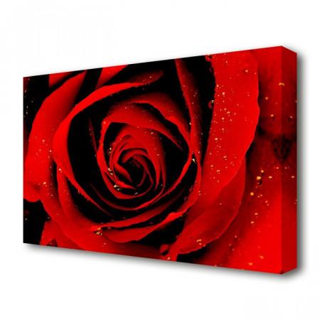 Tablou cu trandafir, 66,04 x 101,6 x 4,4 cm