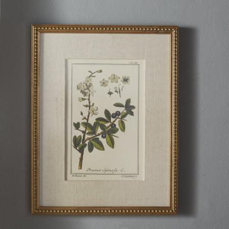 Tablou 'Floral Botanical Study', 6 piese, 22,63cm H x 17,63cm W x 2cm D