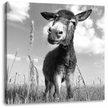 Tablou Donkey on a Sunny Meadow, 60cm H x 60cm W