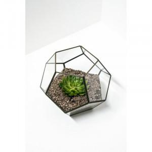 Terariu din sticla, 24 x 30 cm