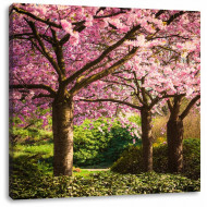"Tablou ""Ciresii in floare"", panza, roz, 60 x 60 cm"