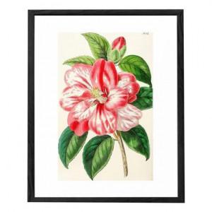 Tablou Flower II