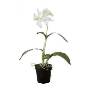 Orhidee alba artificiala in ghiveci, H50 cm