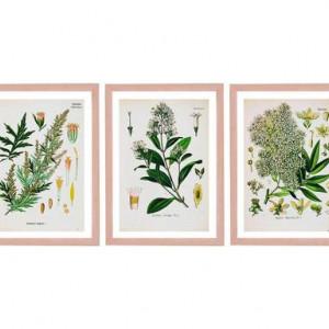 Set de 3 tablouri Light Flowers