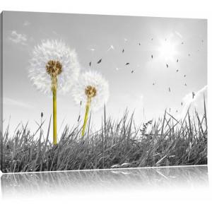 """Tablou """"Păpădie pe câmp"""", gri, 80 x 120 cm"""