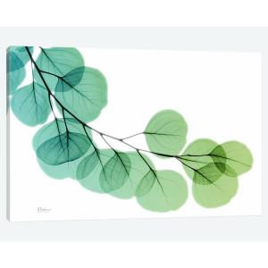Tablou Eucalyptus by Albert Koetsier, 45 x 30 cm