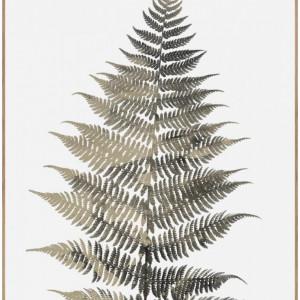 Tablou Fern One, verde/alb/maro, 50 x 70 cm