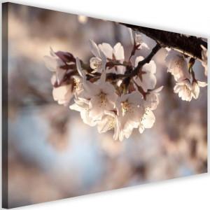Tablou 'Flowering Cherry', crem, 40 x 60 cm
