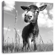 Tablou Donkey on a Sunny Meadow, 60cm H x 60cm W