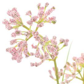 Iarbă artificială cu flori, 95 cm