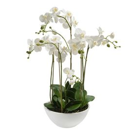 Emerald Orhidee artificială Phalaenopsis, alb, 80 cm 20.335C