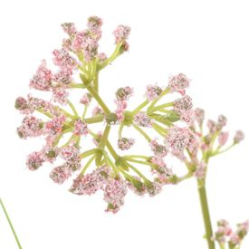 Iarbă artificială cu flori, 75 cm