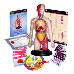 Kit educational mulaj Corpul uman si sistemul digestiv