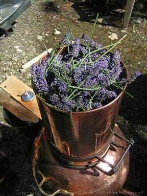 Cazan cu Coloana Distilare Uleiuri Esentiale, Bauturi Aromatice, 60 Litri