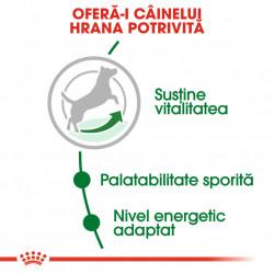 Hrana uscata caini ROYAL CANIN MINI ADULT 8+ hrana potrivita