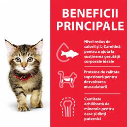 Hill's SP Feline Kitten