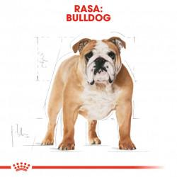 Hrana uscata caini ROYAL CANIN Bulldog Adult Rasa Bulldog