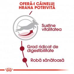 Hrana uscata caini ROYAL CANIN Medium Adult 7+ hrana potrivita