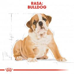 Hrana uscata caini ROYAL CANIN Bulldog Puppy Rasa Bulldog